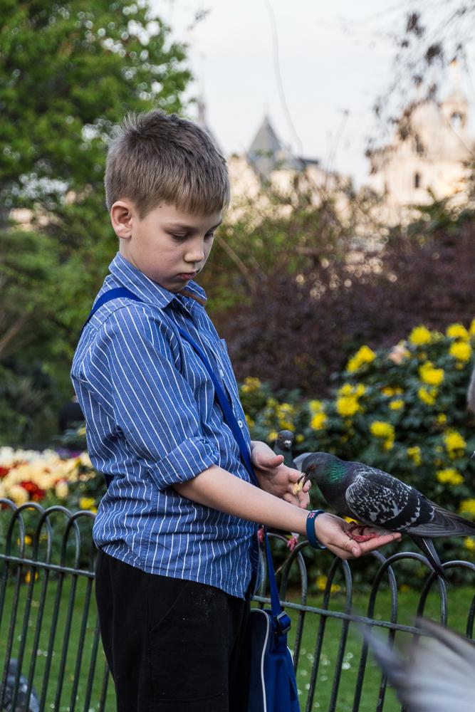 Junge füttert Tauben