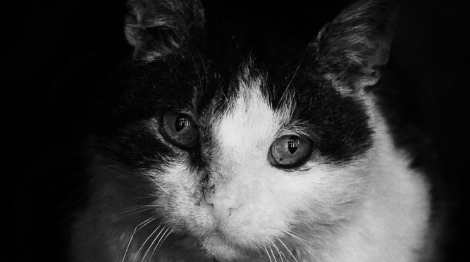 Fight Club Cat