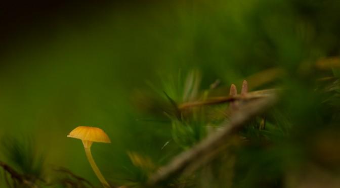 Der Sprössling im Wald