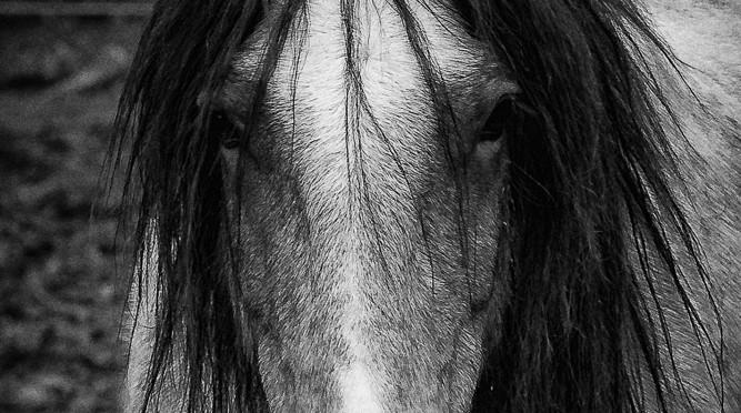 Hippie Pferd
