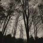 Eisenbäume im Wald