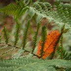 Die letzten Herbstfarben