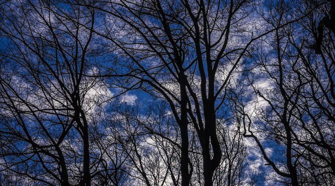 Dämmer-Wald