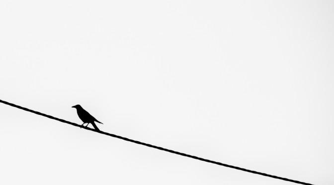 Kontrast Vogel