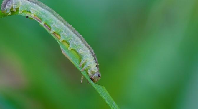 Pre-Schmetterling