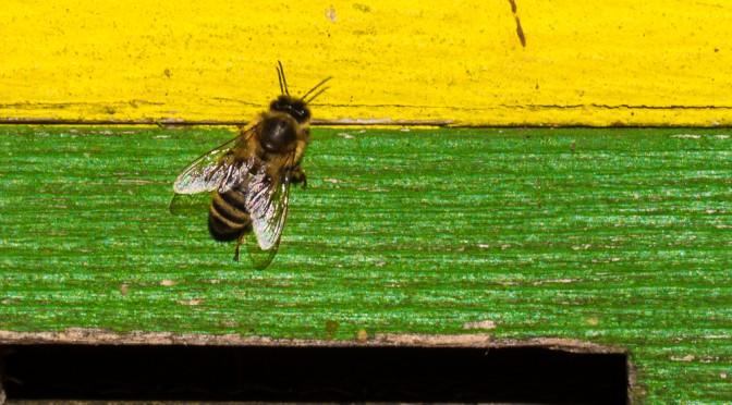 Besuch bei der Biene Maja